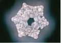Copyright © Masaru Emoto